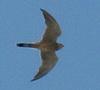 Falcon's picture