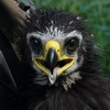 Profile picture for user Eaglet