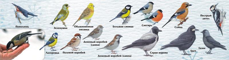 птицы беларуси картинки и названия него